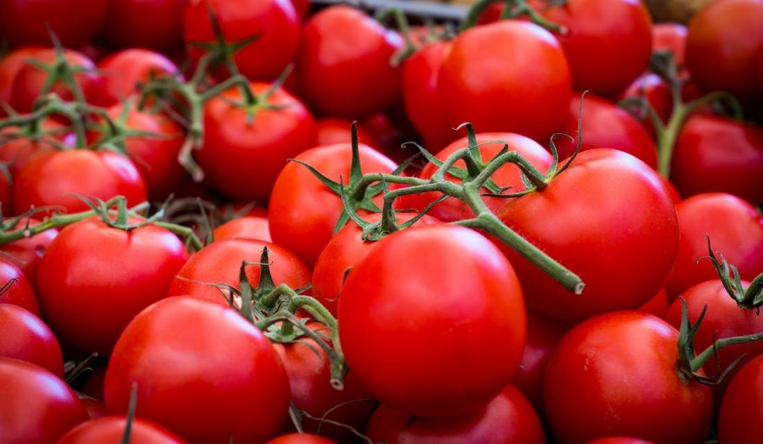 Starting Tomato Farming Business In Zimbabwe And The Business Plan